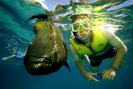 He's a Giant! Snorkelling with huge fish at Moore reef near Cairns